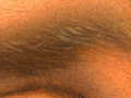 Micro 20. Detail of eyebrow showing variety o…