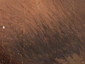 Micro 04. Detail of hairs on chin (7.1 x mag)…