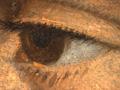 Micro 01. Eye, showing wet-in-wet technique (…