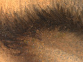 Micro 02. Part of eyebrow, showing soft brush…