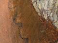 Micro 06. Underdrawing beneath the flesh pain…