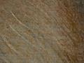 Micro 07. Detail of the beard (7.1 x mag).