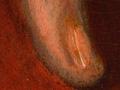 Micro 19. Detail of fingernail (7.1 x mag).