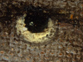 Micro 10. Detail of the falcon's eye (10 x ma…