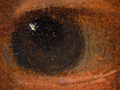 Micro 01. Detail of the eye on the right (7.1…