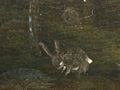 Micro 22. Detail of the rabbits in the landsc…