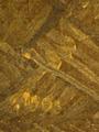 Micro 19. Detail of rush matting, showing gre…