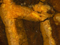 Micro 15. Detail of orpiment in the headdress…