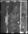 X-ray mosaic 01. X-ray image of the whole pan…