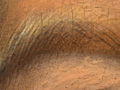 Micro 01. Eyebrow (left side), showing hatche…