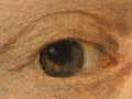 Micro 01. Lady Dacre's right eye.