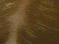 Micro 12. Detail of hair (7.1 x mag).
