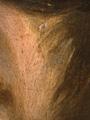 Micro 04. Blended paint where hair meets ear…