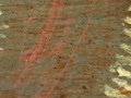 Micro 24. Residues of red lake glaze above gr…