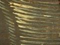 Micro 25. Detail of petticoat (7.1 x mag).