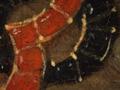 Micro 05. Detail of jewels on headress (7.1 x…