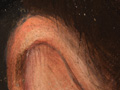 Micro 04. Top of the ear, showing dark hair p…