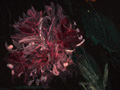 Micro 20. Detail of flower on the wreath arou…