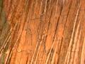 Micro 18. Detail of hair (7.1 x mag).