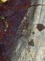 Micro 16. Detail showing the purple paint lay…