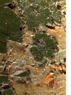 A Photomicrograph of an area of damage<br> of the green table cloth